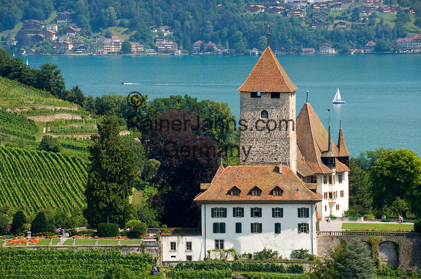 CHE, Schweiz, Kanton Bern, Berner Oberland, Spiez: Schloss Spiez und Weinberge am Thunersee | CHE, Switzerland, Bern Canton, Bernese Oberland, Spiez: castle Spiez and vineyards at Lake Thun