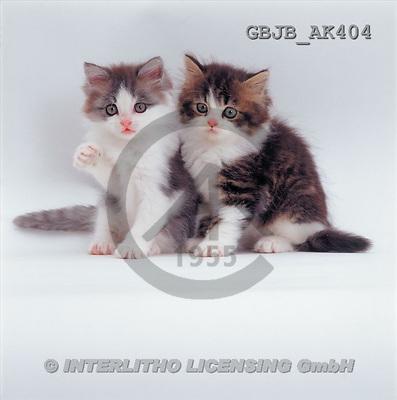 Kim, ANIMALS, fondless, photos(GBJBAK404,#A#) Tiere ohne Fond, animales sind fondo