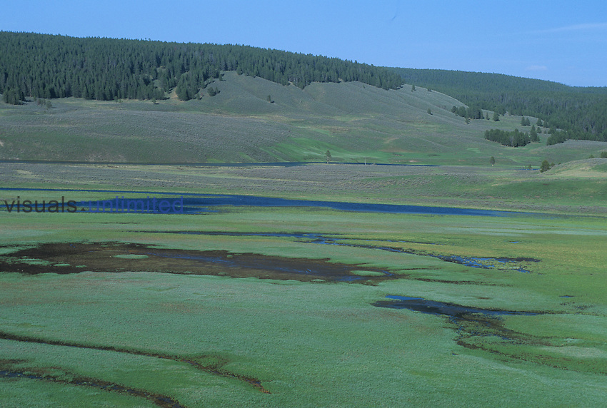 Hayden Valley with wetlands surrounded by sagebrush and coniferous forests, Yellowstone National Park, Wyoming, USA.