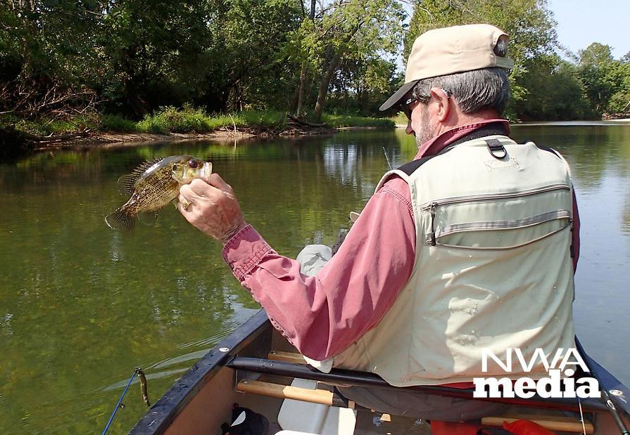 NWA Democrat-Gazette/FLIP PUTTHOFF<br />Ozark bass, also called goggle-eye, were a bonus fish Sept. 8 2017 on the Elk River.