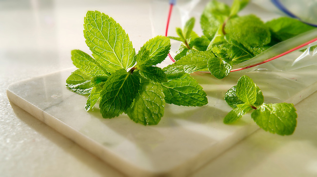 Fresh Mint Leaves being packed