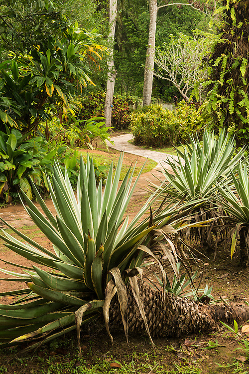 Gardens at the Xishuangbanna Tropical Botanic Garden.