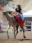 Teri Vance races in the 54th International Camel Races in Virginia City, Nev., on Friday, Sept. 6, 2013.  <br /> Photo by Cathleen Allison