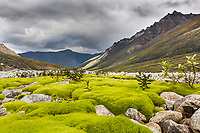 Green moss on rocks, tupik creek, Brooks Range, Gates of the Arctic National Park, Alaska