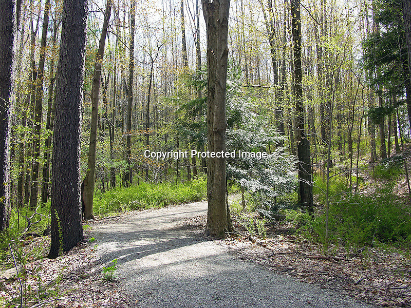 Springtime Woods Trail in New England, USA