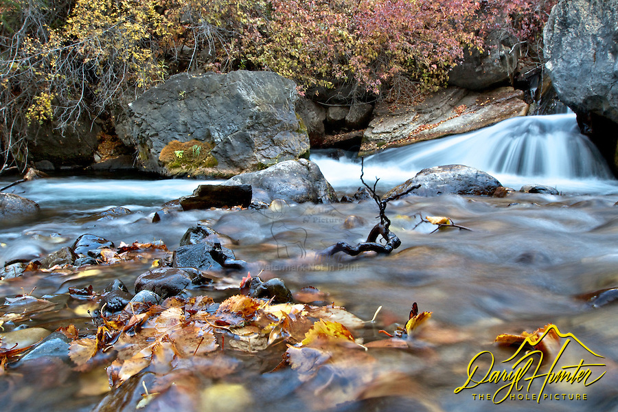 Autumn leaves, Palisades creek cascade, Swan Valley Idaho