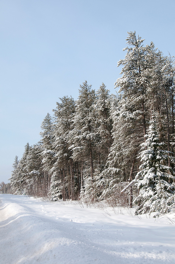 Fresh snow clings to evergreens during winter in the Keweenaw Peninsula of Michigan.