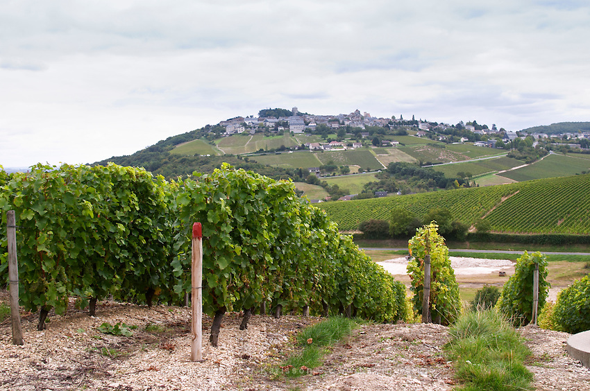 Vineyard. View of Sancerre village. Domaine de la Perriere, Sancerre, Loire, France