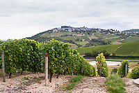 Vineyard. View of Sancerre village. Domaine de la Perriere, Sancerre, Loire, France