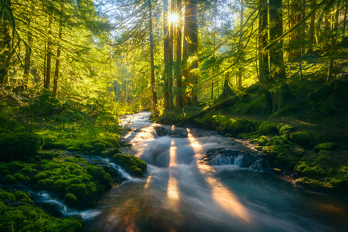 Sunbeams burst through trees of this old growth forest with cascading natural springs, as the sun rises in early spring.<br /> <br /> Artist Edition 15/100 Limited