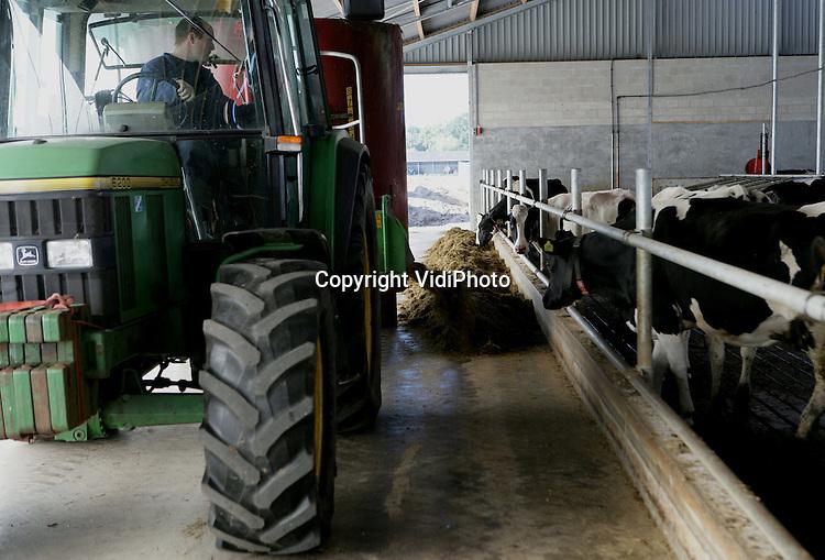 Foto: VidiPhoto..RHENEN - Melkveebedrijf Versteeg Rhenen