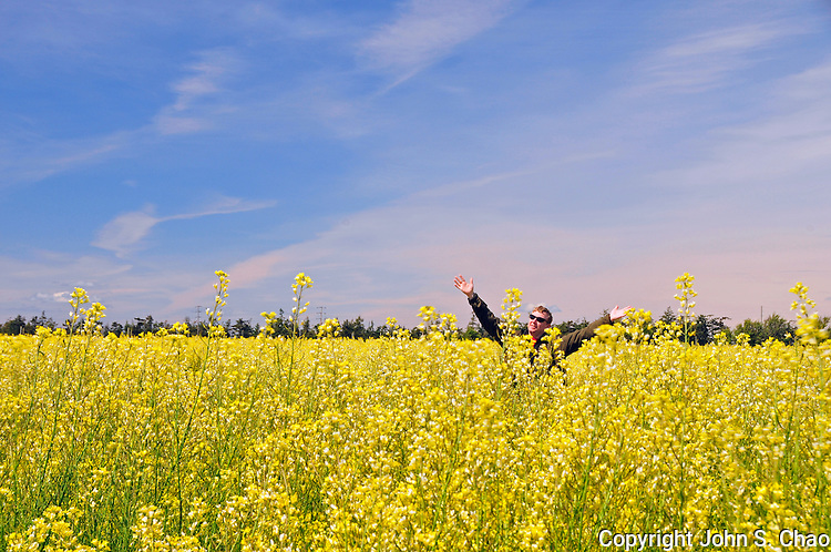 Man in sunglasses with outstretched arms, celebrating a sunny blue sky day in a farm field of yellow flowering cabbage. Ebey's Landing National Historical Reserve, Whidbey Island, Washington State