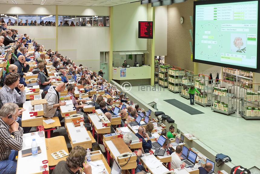 Hollande, Aalsmeer, le marché aux fleurs aux enchères, le Bloemenveiling Aalsmeer en néerlandais,  le plus grand marché mondiale de la fleur coupée, vente au enchère ou vente au cadran // Holland, Aalsmeer, Aalsmeer flower auction, the Dutch Bloemenveiling Aalsmeer, the world's largest market of cut flowers. In the auction house.