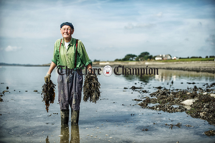 Local man Paddy Hanrahan collecting seaweed as fertilizer for his garden near Cappa, Kilrush, Co. Clare.