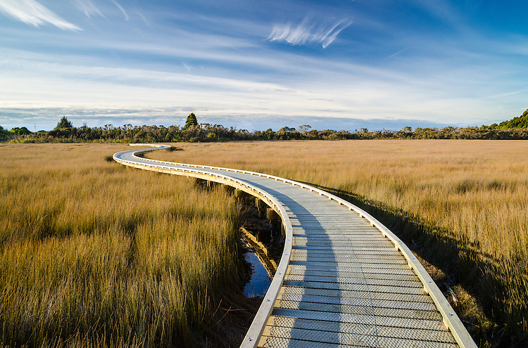 Curving boardwalk through wetland at Okarito, South Westland, New Zealand