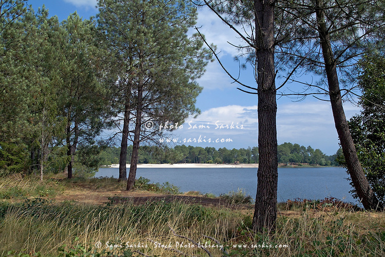 Lake surrounded by trees of Landes Forest, Hostens, Aquitaine, France.