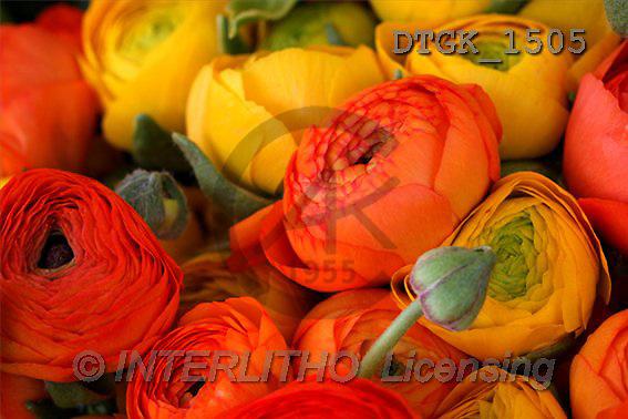 Gisela, FLOWERS, photos(DTGK1505,#F#) Blumen, flores, retrato