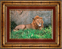 Lion<br />