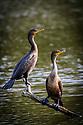 Twins / September 26, 2012 / Strawbridge Lake