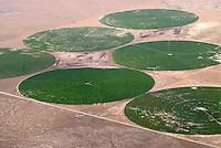 Bewaesserung von Feldern in USA: AMERIKA, VEREINIGTE STAATEN VON AMERIKA, NEW MEXICO,  (AMERICA, UNITED STATES OF AMERICA), 06.05.2006: In der Wueste von New Mexiko werder Felder mit Futtermitteln kreisrund durch Bewaesserungsanlagen bewaessert.