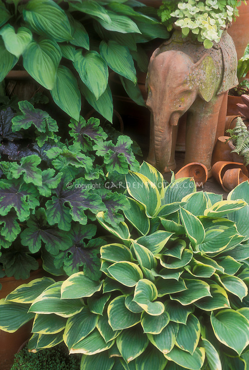 Hosta Geranium Shady Garden Plants Plant Amp Flower Stock