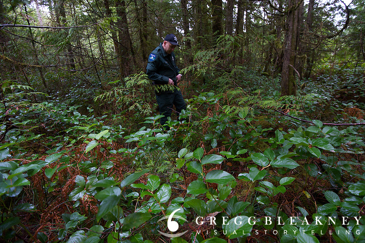 DNR officer Jared Eison searches through a devastated Bear Grass zone in the Queets Valley.  Olympic Peninsula, WA State