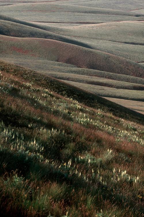 Hanford Reach National Monument, Rattlesnake Ridge, spring flowers, grasslands, Fitzner/Eberhardt Arid Lands Ecology Reserve; Hanford site; Washington State; .