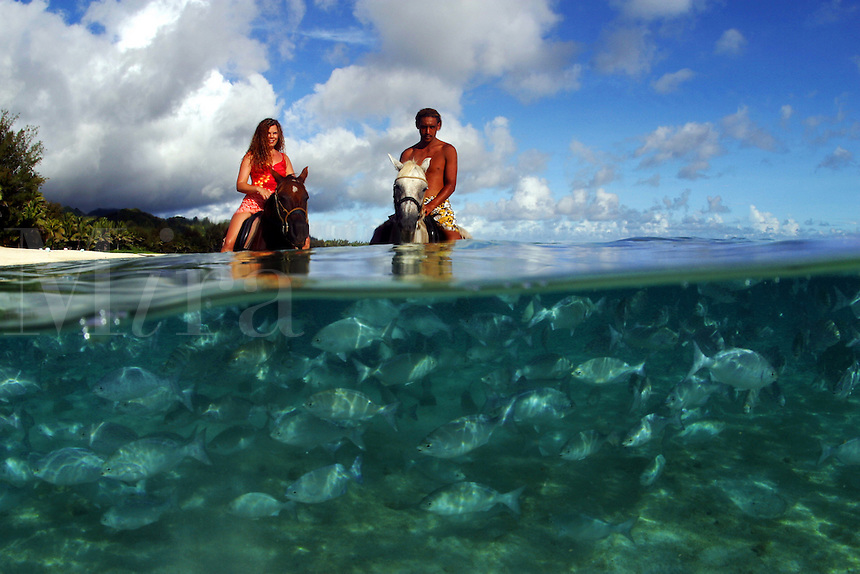 These chub [Kyphosus bigibbus] are concentrated the lagoon in front of The Rarotongan Resort, where they are fed daily. This split scene was shot with a full frame fisheye lens and has not been altered digitally. Rarotonga, The Cook Islands.