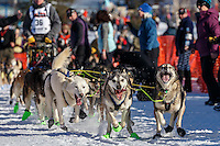 Mats Pettersson lead dogs dig in as they leave the start line during the Re- Start of the 2016 Iditarod in Willow, Alaska.  March 06, 2016