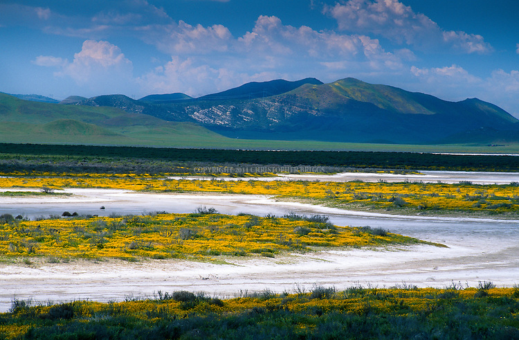 Salt flats in the area surrounding Soda Lake created as vernal pools fed by spring rains evaporate. Carrizo Plain; roughly 50 miles (80 km) long and up to 15 miles (24 km) across. Contains the 250,000 acre (1,012 km²; 101,215 ha) Carrizo Plain National Monument (Est. 1/17/2001), largest single native grassland (San Joaquin Valley biogeographic province) remaining in California. San Luis Obispo County, CA.