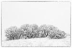 Winter's stillness along the Palmer Divide, Colorado