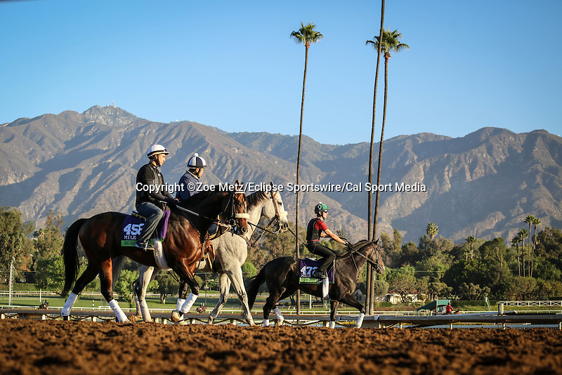 October 28, 2014: Big Bane Theory exercises in preparation for the Breeders' Cup Dirt Mile at Santa Anita Park in Arcadia, California on October 28, 2014. Zoe Metz/ESW/CSM