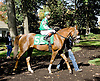 Win Willy before The DTHA Governors Day Stakes at Delaware Park on 10/20/12