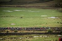 peloton up the Kidstones Climb<br /> <br /> Elite Men Road Race from Leeds to Harrogate (shortened to 262km)<br /> 2019 UCI Road World Championships Yorkshire (GBR)<br /> <br /> ©kramon
