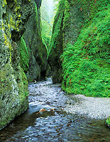 Oneonta Gorge in spring. Columbia River Gorge National Scenic Area, Oregon