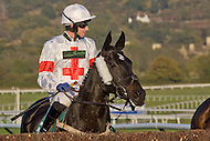 Cheltenham-Oct11-Day1