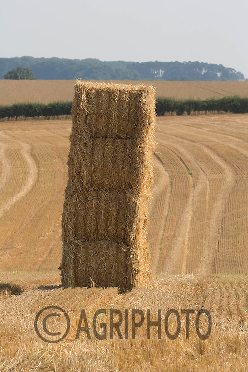 Barley Straw stacked in a field