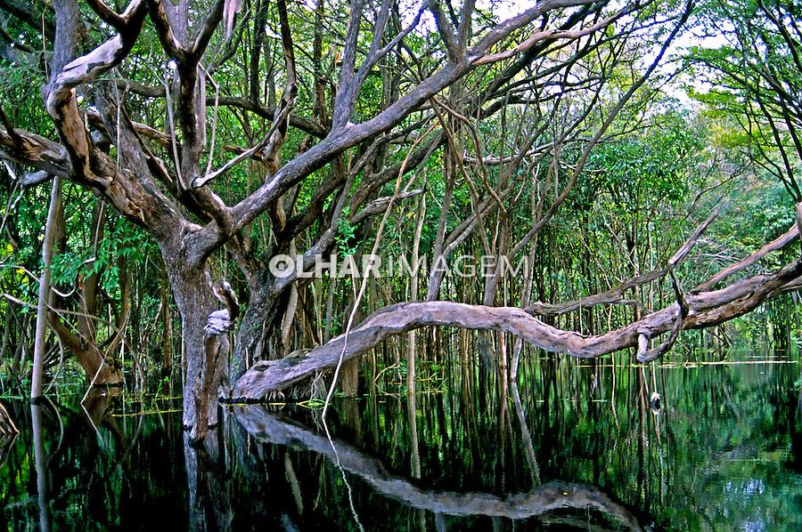 Igarapé afluente do rio Solimões na Amazônia. Amazonas. Foto de Ricardo Azoury.