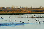 waterfowl and Consumnes River Preserve