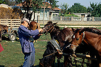 Bulgarien, Pferdemarkt in der Dobrudscha