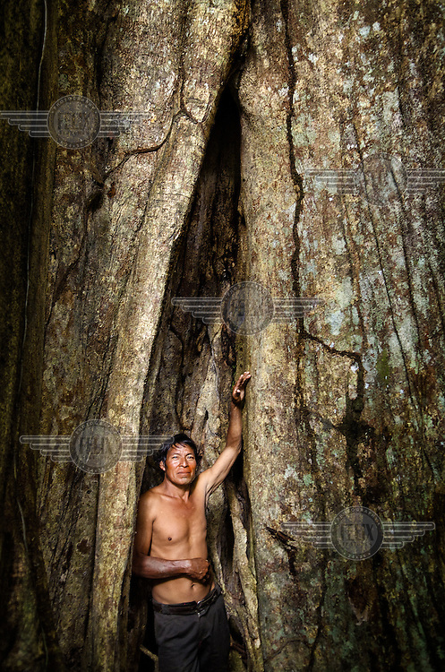 The chief of the community in Poyeni stands in the gap of a tree trunk.