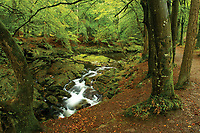 Shimna River, Tollymore Forest Park, Newcastle, County Down