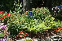 Blue gazing ball with hemerocallis daylilies, impatiens, ferns, hydrangea, pelagronium, spiraea under tree in raised bed with rocks