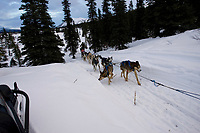 Charlie Boulding on Trail Leaving Rainy Pass Chkpt AK 2005 Iditarod