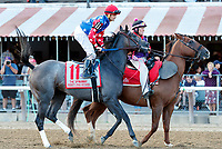 Restless Rider in the post parade as Sippican Harbor (no. 6) wins the Spinaway Stakes (Grade 1), Sep. 1, 2018 at the Saratoga Race Course, Saratoga Springs, NY.  Ridden by  Joel Rosario, and trained by Gary Contessa, Sippican Harbor finished 2 lengths in front of Restless Rider (No. 11).  (Bruce Dudek/Eclipse Sportswire)