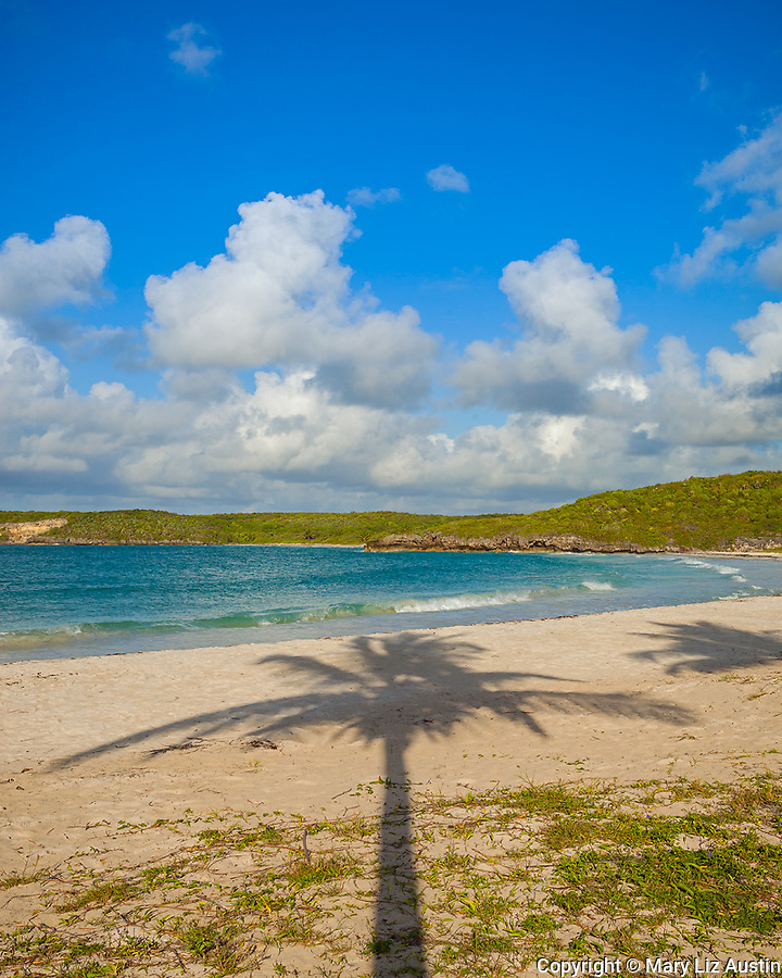 Vieques, Puerto Rico: Palm tree shadow on the sand at Red Beach (Playa Caracas)