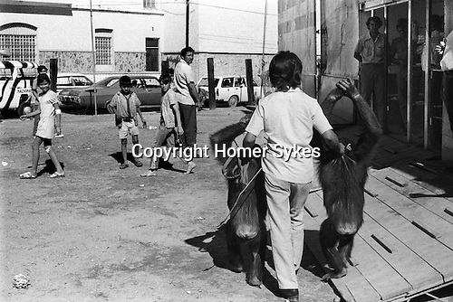 Mazatlan Mexico. Circus animals promoting the circus.  Trainer with two chimpanzees held by the scruff of the neck and taken around town to drum up business for the traveling circus.