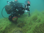 Scuba Diver scuba diving underwater photography MN