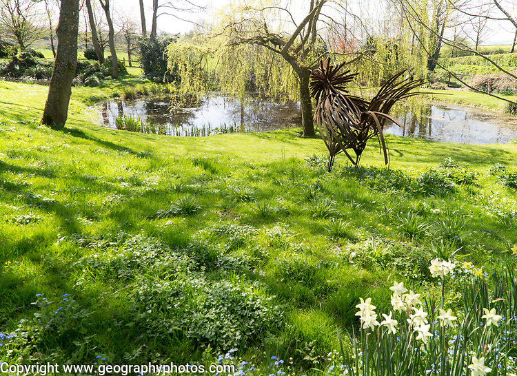 Iron cockerel sculpture, pond, wildflowers in garden of Manor Farm,  Huish, Vale of Pewsey, Wiltshire, England, UK