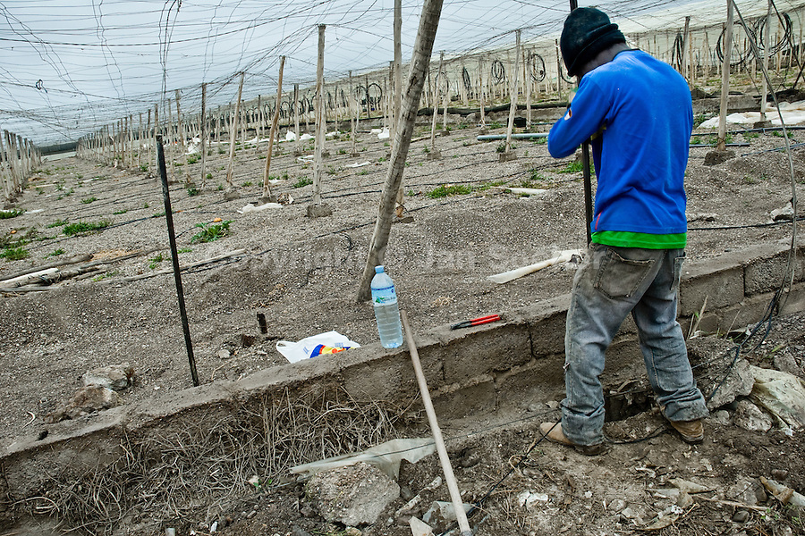 An illegal Subsaharian immigrant from Africa builds a new greenhouse in El Ejido, Spain, 23 May 2007. El Ejido, a dry region on the coast of Andalusia, has changed during the last decades into the centre of vegetable production not only for the Spanish market. A half of Europe is supplied by tomatoes, peppers and melons from El Ejido. This economic miracle is from a major part based on a cheap labor force of illegal immigrants from Maghreb and Subsaharian Africa. Tens of thousands of workers keep the plastic sea of greenhouses running for the minimum wage of 30 Euros a day.